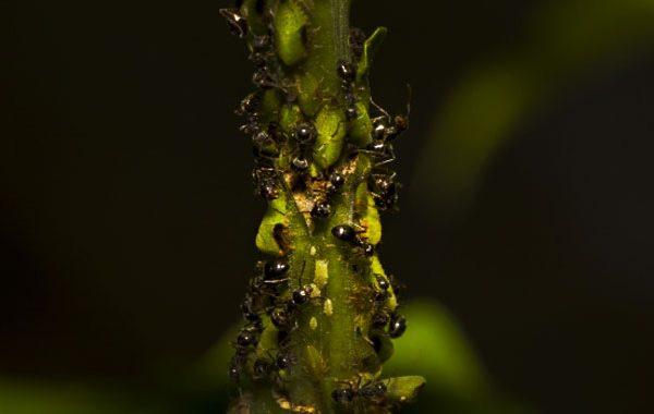 庭と観葉植物に大量発生した蟻を駆除した。